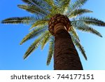 under the palm tree | Shutterstock . vector #744177151