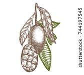 mango tree vintage design...   Shutterstock .eps vector #744197545