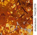 golden leaved branches | Shutterstock . vector #744218779