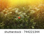 flowers on the sunny field | Shutterstock . vector #744221344