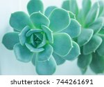 Beautiful Stone Rose. Stone...