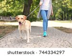 Stock photo woman walking labrador retriever on lead in park 744334297