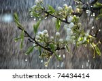 A Tree Branch With Flowers In...