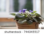 flower in a pot | Shutterstock . vector #744345517