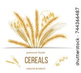 wheat  barley  oat and rye set. ... | Shutterstock .eps vector #744366487