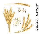 barley  oat set. plant ... | Shutterstock .eps vector #744374617
