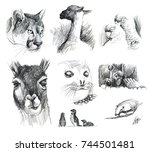 south america. patagonia animal.... | Shutterstock . vector #744501481