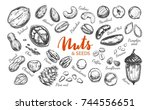 nuts and seeds collection.... | Shutterstock .eps vector #744556651
