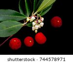 strawberry tree flowers and... | Shutterstock . vector #744578971