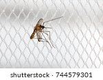 mosquito sits on a curtain at a ... | Shutterstock . vector #744579301