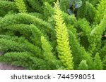 Green Plants In Garden...