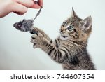 Stock photo gray kitten in play with mouse gray background 744607354