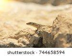 beige lizard sits on a stone. | Shutterstock . vector #744658594