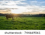 french limousin landscape with... | Shutterstock . vector #744669061