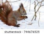 cute fluffy squirrel eating... | Shutterstock . vector #744676525