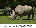 white rhinoceros in the... | Shutterstock . vector #744720709