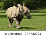 white rhinoceros in the... | Shutterstock . vector #744720721