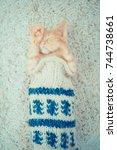 Stock photo little red kitten the kitten lies on the fluffy carpet at home little kitten sleeps close up of 744738661