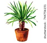 houseplant dracaena in a pot ... | Shutterstock . vector #744756151