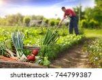 Basket With Organic Vegetable...