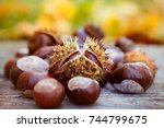 chestnuts close up  horse... | Shutterstock . vector #744799675