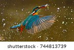 common kingfisher fly  whit a... | Shutterstock . vector #744813739
