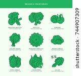 genus brassica vegetables set.... | Shutterstock .eps vector #744907309