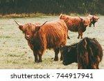 highland cattle cow group farm... | Shutterstock . vector #744917941