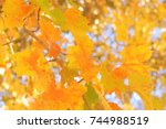 yellow autumn leaves hanging... | Shutterstock . vector #744988519