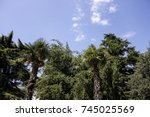 nature forest tree palm | Shutterstock . vector #745025569