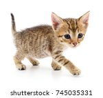Stock photo small brown kitten isolated on white background 745035331