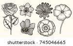botany set vintage flowers.... | Shutterstock .eps vector #745046665