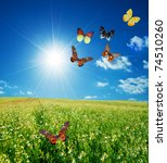 Butterfly Spring Field. A Grou...