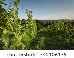 vineyard winery landscape in... | Shutterstock . vector #745106179