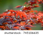 red orange colored leaves on...   Shutterstock . vector #745106635