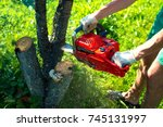 A man with a chainsaw is sawing a tree on a plot (cherry) - stock photo