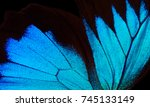 Wings Of The Butterfly Ulysses...