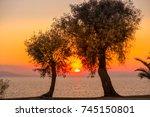 Trees Framing Sunset In...