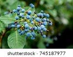 Wild Grown Blue Berries