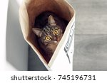 Stock photo funny cat with big yellow eyes sitting in a paper bag and looks out from it funny pets playing at 745196731