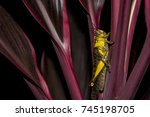 a locust sticking to a leaf | Shutterstock . vector #745198705