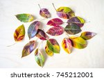 Autumn  Colored Mosaic Of...