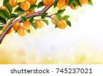 Apricot Orchard Background ...