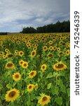 field of sunflowers vibrant... | Shutterstock . vector #745246339