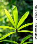 beautiful green leaves in the... | Shutterstock . vector #745284487