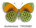 Stock photo butterfly asterope sapphira nymphalidae male from brazil ventral side 74529685
