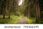 Footpath In Austrian Pine Tree...