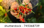 red chillies and green chillies ... | Shutterstock . vector #745368739