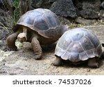 Tortoise Highway   Galapagos...