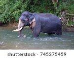 elephant   thai elephant... | Shutterstock . vector #745375459